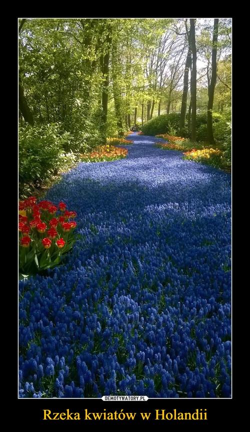 Rzeka kwiatów w Holandii