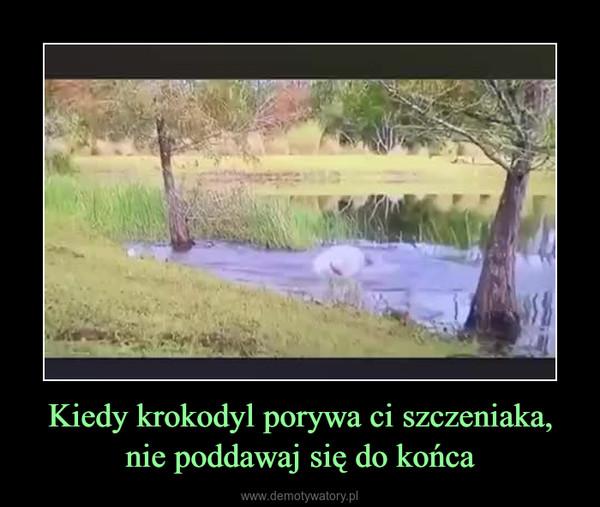 Kiedy krokodyl porywa ci szczeniaka, nie poddawaj się do końca –