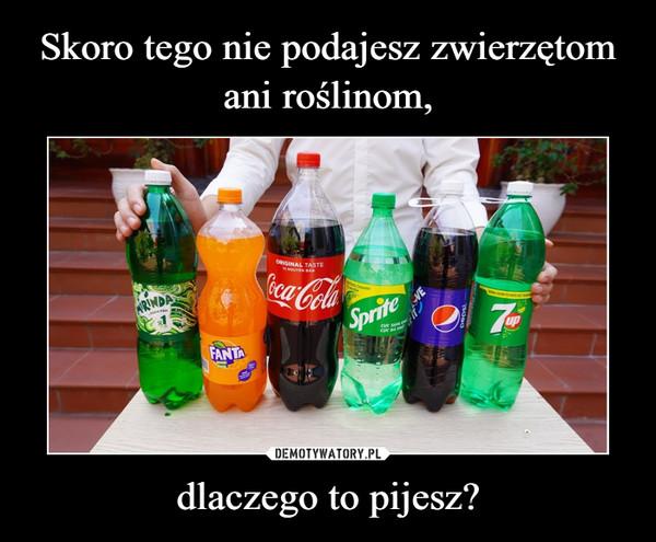 dlaczego to pijesz? –