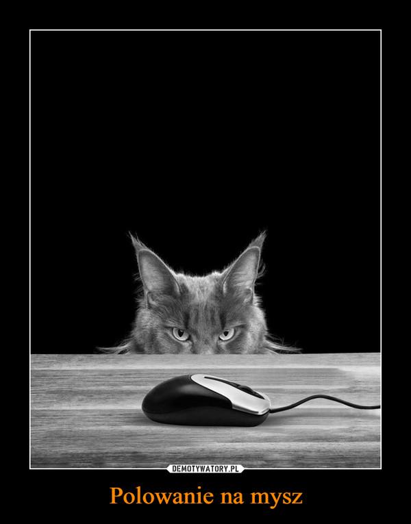Polowanie na mysz –