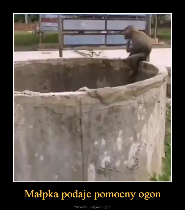 Małpka podaje pomocny ogon –
