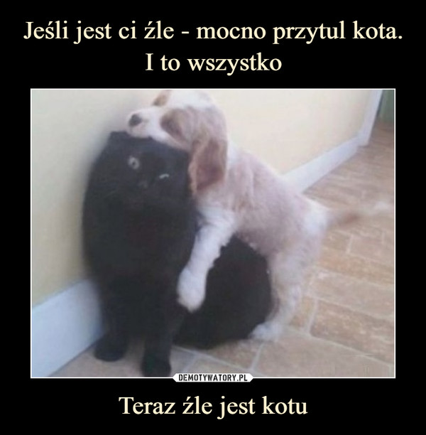 Teraz źle jest kotu –