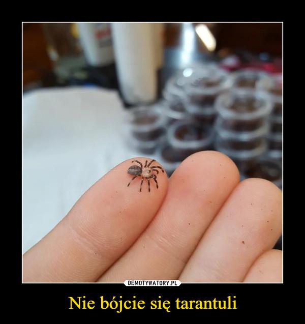 Nie bójcie się tarantuli –