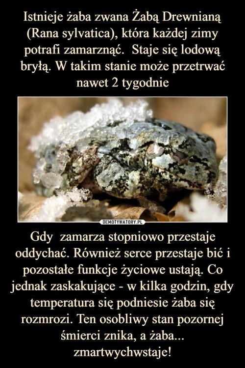Istnieje żaba zwana Żabą Drewnianą (Rana sylvatica), która każdej zimy potrafi zamarznąć.  Staje się lodową bryłą. W takim stanie może przetrwać nawet 2 tygodnie Gdy  zamarza stopniowo przestaje oddychać. Również serce przestaje bić i pozostałe funkcje życiowe ustają. Co jednak zaskakujące - w kilka godzin, gdy temperatura się podniesie żaba się rozmrozi. Ten osobliwy stan pozornej śmierci znika, a żaba... zmartwychwstaje!