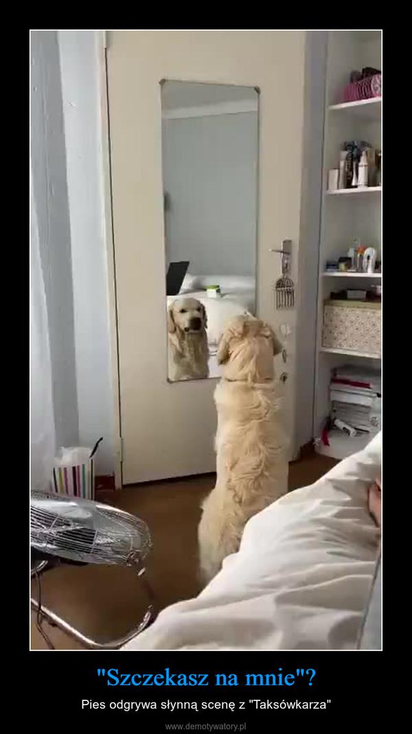 """""""Szczekasz na mnie""""? – Pies odgrywa słynną scenę z """"Taksówkarza"""""""