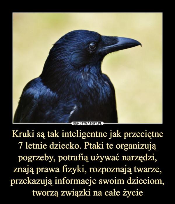 Kruki są tak inteligentne jak przeciętne7 letnie dziecko. Ptaki te organizują pogrzeby, potrafią używać narzędzi, znają prawa fizyki, rozpoznają twarze, przekazują informacje swoim dzieciom, tworzą związki na całe życie –