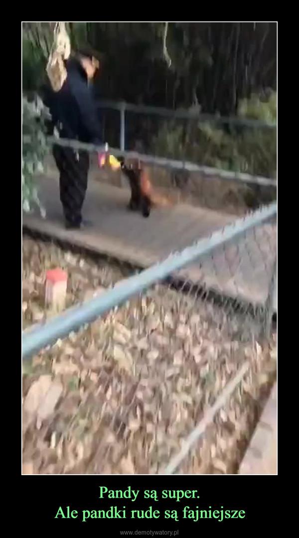 Pandy są super.Ale pandki rude są fajniejsze –