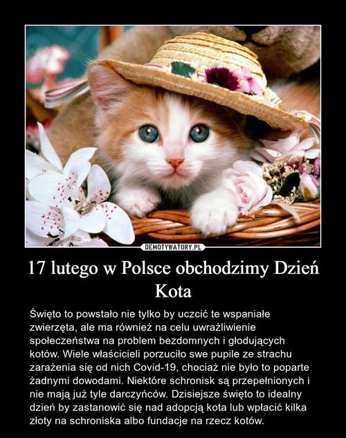17 lutego w Polsce obchodzimy Dzień Kota