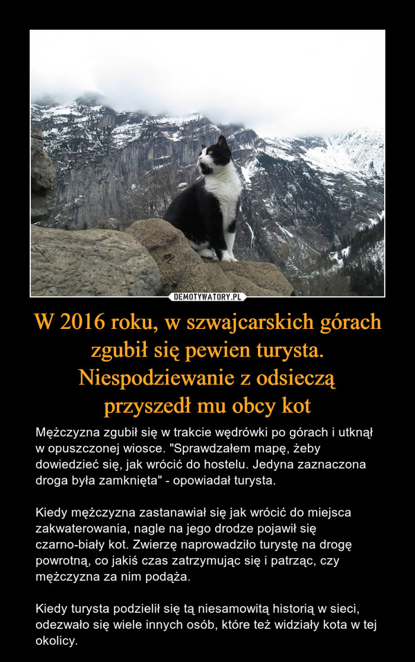 """W 2016 roku, w szwajcarskich górach zgubił się pewien turysta. Niespodziewanie z odsiecząprzyszedł mu obcy kot – Mężczyzna zgubił się w trakcie wędrówki po górach i utknął w opuszczonej wiosce. """"Sprawdzałem mapę, żeby dowiedzieć się, jak wrócić do hostelu. Jedyna zaznaczona droga była zamknięta"""" - opowiadał turysta.Kiedy mężczyzna zastanawiał się jak wrócić do miejsca zakwaterowania, nagle na jego drodze pojawił się czarno-biały kot. Zwierzę naprowadziło turystę na drogę powrotną, co jakiś czas zatrzymując się i patrząc, czy mężczyzna za nim podąża.Kiedy turysta podzielił się tą niesamowitą historią w sieci, odezwało się wiele innych osób, które też widziały kota w tej okolicy."""