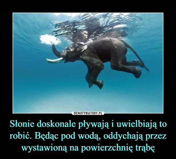 Słonie doskonale pływają i uwielbiają to robić. Będąc pod wodą, oddychają przez wystawioną na powierzchnię trąbę –