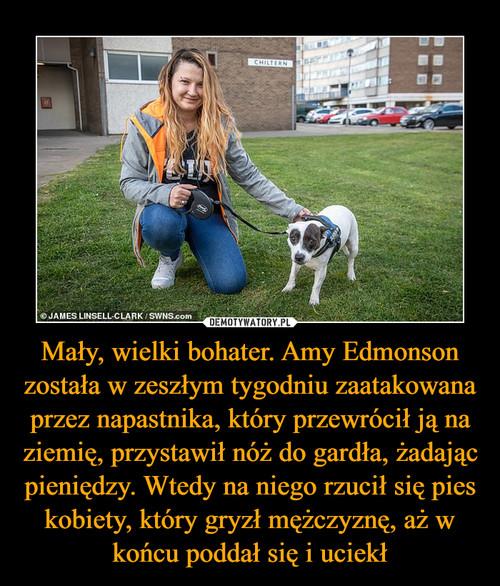 Mały, wielki bohater. Amy Edmonson została w zeszłym tygodniu zaatakowana przez napastnika, który przewrócił ją na ziemię, przystawił nóż do gardła, żadając pieniędzy. Wtedy na niego rzucił się pies kobiety, który gryzł mężczyznę, aż w końcu poddał się i uciekł