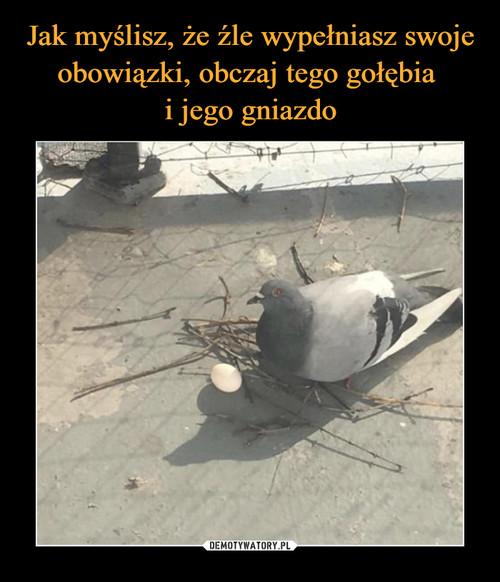 Jak myślisz, że źle wypełniasz swoje obowiązki, obczaj tego gołębia  i jego gniazdo