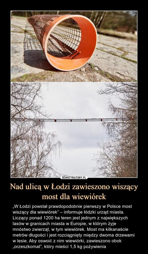 Nad ulicą w Łodzi zawieszono wiszący most dla wiewiórek