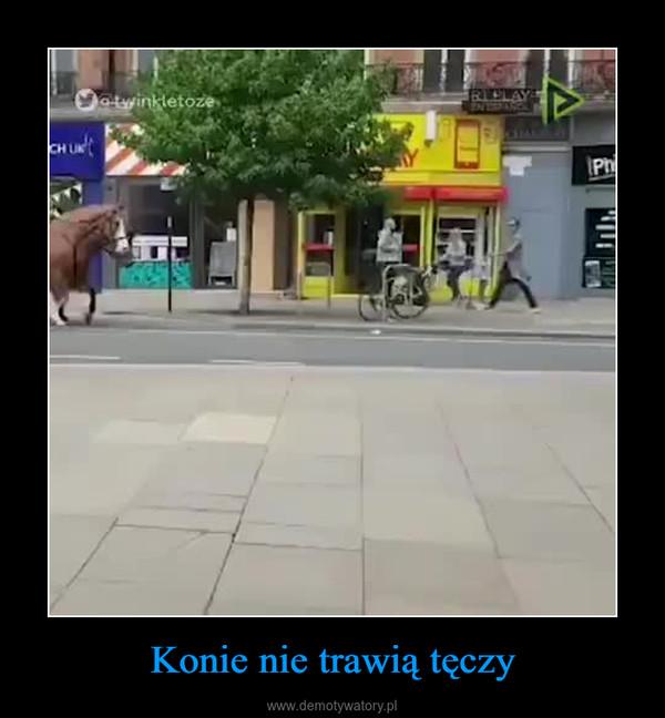 Konie nie trawią tęczy –
