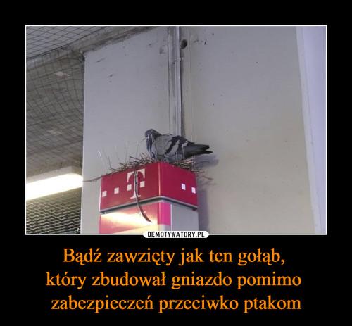 Bądź zawzięty jak ten gołąb,  który zbudował gniazdo pomimo  zabezpieczeń przeciwko ptakom
