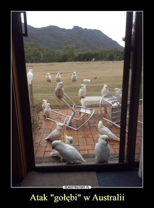 """Atak """"gołębi"""" w Australii"""