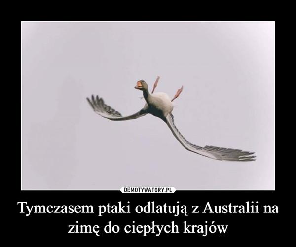 Tymczasem ptaki odlatują z Australii na zimę do ciepłych krajów –