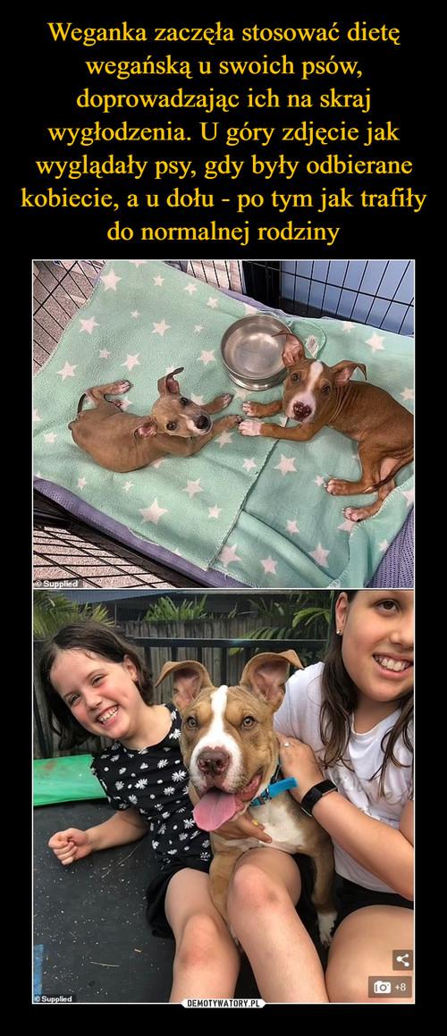 Weganka zaczęła stosować dietę wegańską u swoich psów, doprowadzając ich na skraj wygłodzenia. U góry zdjęcie jak wyglądały psy, gdy były odbierane kobiecie, a u dołu - po tym jak trafiły do normalnej rodziny