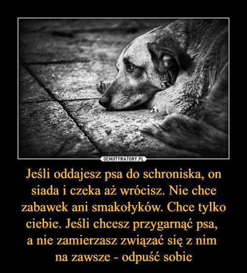 Jeśli oddajesz psa do schroniska, on siada i czeka aż wrócisz. Nie chce zabawek ani smakołyków. Chce tylko ciebie. Jeśli chcesz przygarnąć psa,  a nie zamierzasz związać się z nim  na zawsze - odpuść sobie