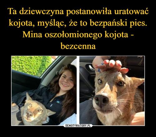 Ta dziewczyna postanowiła uratować kojota, myśląc, że to bezpański pies. Mina oszołomionego kojota - bezcenna