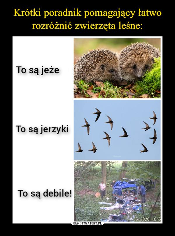 –  To są jeże To są jerzyki To są debile!