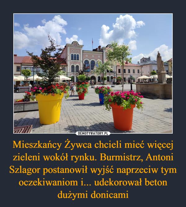 Mieszkańcy Żywca chcieli mieć więcej zieleni wokół rynku. Burmistrz, Antoni Szlagor postanowił wyjść naprzeciw tym oczekiwaniom i... udekorował beton dużymi donicami –