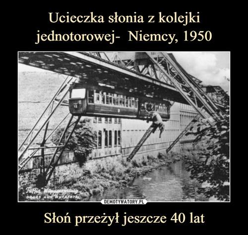 Ucieczka słonia z kolejki jednotorowej-  Niemcy, 1950 Słoń przeżył jeszcze 40 lat