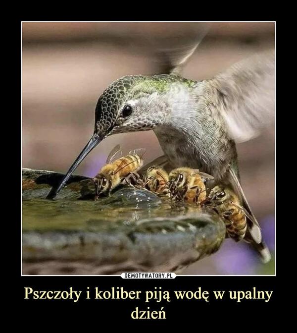 Pszczoły i koliber piją wodę w upalny dzień –
