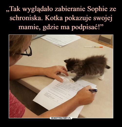 """""""Tak wyglądało zabieranie Sophie ze schroniska. Kotka pokazuje swojej mamie, gdzie ma podpisać!"""""""