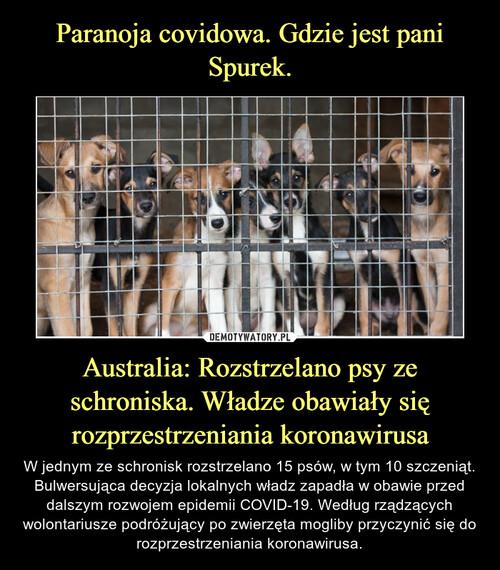 Paranoja covidowa. Gdzie jest pani Spurek. Australia: Rozstrzelano psy ze schroniska. Władze obawiały się rozprzestrzeniania koronawirusa
