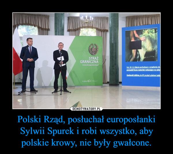 Polski Rząd, posłuchał europosłanki Sylwii Spurek i robi wszystko, aby polskie krowy, nie były gwałcone. –