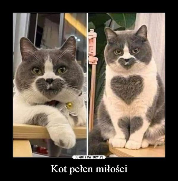 Kot pełen miłości